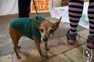 INDY in green jumper